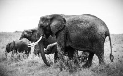 Über Elefanten und individuelle Wahrnehmungsperspektiven